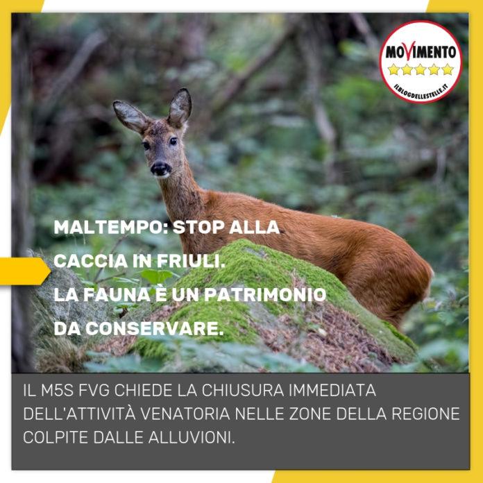 Dal Zovo/Zullo – Mozione: Stop alla caccia nelle aree colpite dal maltempo - m5stelle.com - notizie m5s
